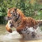 India- Wildlife & Nature