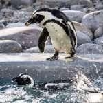 Penguin Release July 2015 (12 of 28)